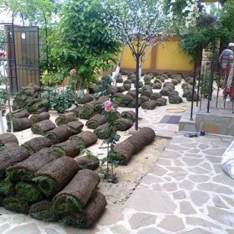 Buxus tuia rulouri gazon