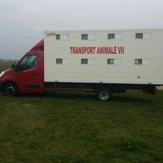 Efectuez transport animale vii CU autoutilitara de 5 tone