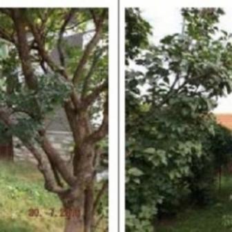 Teren 877 mp si casa, Strada Cojocari, Sat Lunca, Dambovita