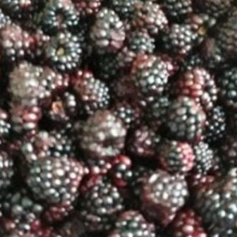 Vand vișinata de casa (lichior de fructe)