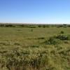 65 ha. pasune in jud. Olt zona Corabia, lunca Dunarii