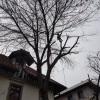 Alpinism utilitar/termoizolatii/toaletari copaci