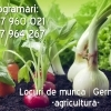 Angajam in agricultura