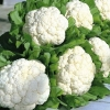 Angajam personal pentru plantat conopida, 1200 euro/luna!