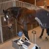 Cabinete veterinare cai angajeaza ajutoare 1400 euro