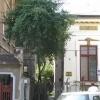 Cismigiu, casa singur curte, amprenta casei = 148 mp,
