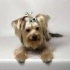 Coafor canin va ofera programare garantata in maxim 3 zile