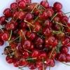 Comercializam pomi fructiferi, arbusti fructiferi, trandafiri si vita-de-vie