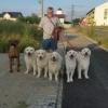 Dresor,etolog canin,dresaj la domiciliul clientului