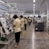 Fabrica de cablaje auto 1500 euro