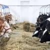 Ferma de animale Irlanda/ 1800 euro