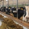Ferma de vite plecare 1300 EUR plecare iunie 2015 Germania
