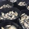 Ferma piscicolă SHESTITSA (ȘASE) Bulgaria vine