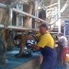 Ferma vaci - cupluri Germania