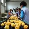 Locuri de munca la hale legume 1444 euro Germania