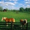 Muncitori in ferme de cai