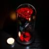 Noblese - Trandafiri Criogenati