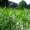 Ofer iarba pentru cosit