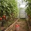 Oferta- sere de legume Germania