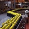 Operatori in fabrica din Germania – NECALIFICATI