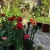 Perla imobiliara, in gradina inflorata, situata in inima Centrul Istoric Brasov