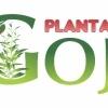 Plante Goji Bio, certificate.