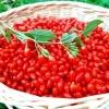 Plante goji de calitate livrate cu certificat de calitate si factura