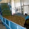Pregatit cartofi in hala pentru export!
