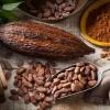 Procesare cacao germania