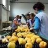 Profita de locuri de munca disponbile! Depozit sortat ambalat legume fructe - Ge