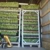 Rasaduri de legume la paleta alveolara si ghiveci