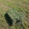 Schimb baloti de lucerna cu animale de ferma sau utilaje agricole
