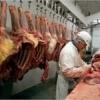 Se cauta barbati la dezosat porc in abator in Olanda-1600EUR/luna net