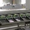 Se cauta muncitori la infoliat castraveti in hala din Germania