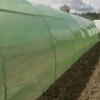 Solar legume si flori 28 m lungime /4 m deschidere/ 2,6 m inaltime