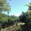 Teren 2250 mp, str. Dupa Iniste, Brasov