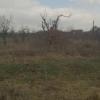 Teren 6641 mp, Glambocu, Arges