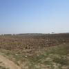 Teren agricol 12,004 mp in Tunari, Ilfov