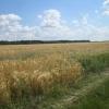 Teren agricol 37444 mp, Domnesti, Teghes, Ilfov