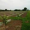Vand livada nou infiintata comuna greaca 3.2 ha