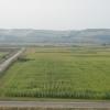 Vand teren agricol 4.300 ha timis comasat total