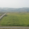 Vand teren agricol 4.300ha Timis comasat 100%
