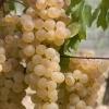 Vin alb si rose natural