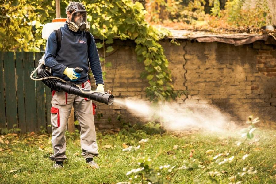 Dezinsectia efectuata de o firma autorizata din Bucuresti