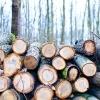 Serviciu ideal de prelucrare lemn